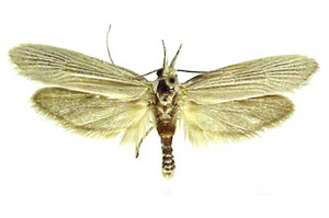Moth killer Spray, carpet Moths, carpet moth control, carpet moth treatment, clothes moth traps, image 1