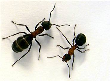 need to get rid of ants got ants in your kitchen or an ant nest in ...