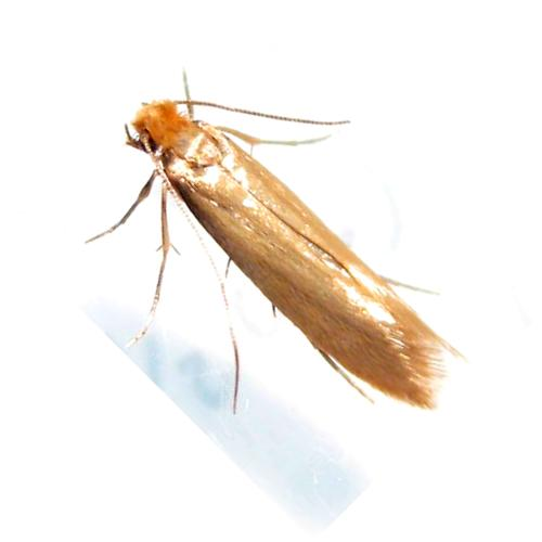 Clothes Moth Killer Products Pest Control Supermarket