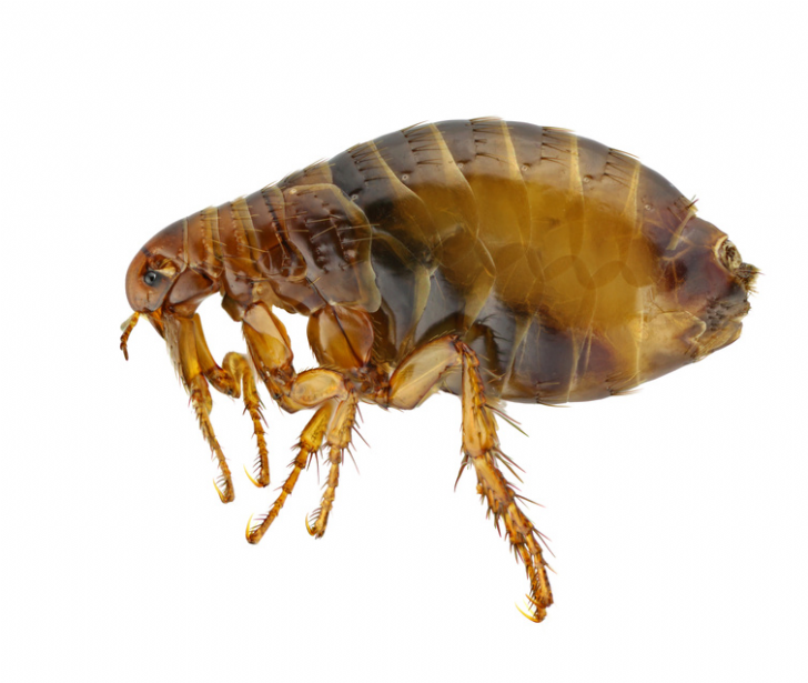 Flea bombs and fogger products pest control supermarket need to get rid of fleas ccuart Images