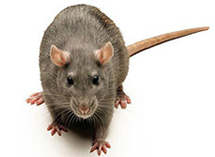 Pest Control Products | Pest Control Supplies